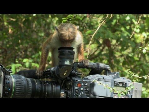 Cute - Monkeys Check Out Camera