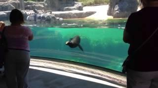 Caring Sea Lion