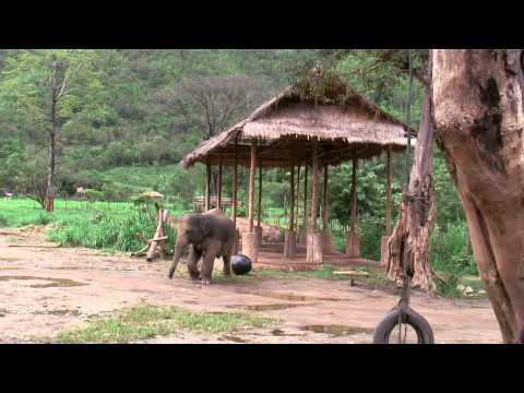 Jokes - Elephant Vs The Ball