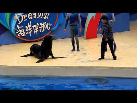 FAIL - Kissing The Sea Lion FAIL