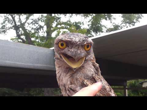 FAIL - Don't Mess With An Owl
