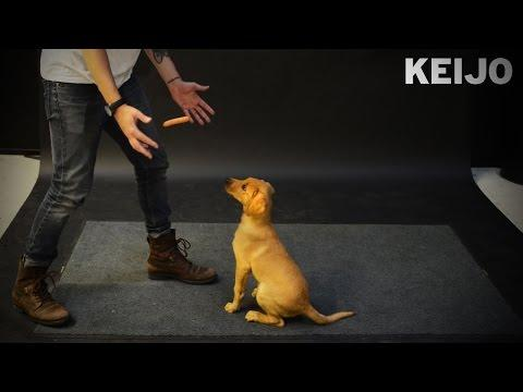 Funny Dogs Reaction To Floating Hot Dogs