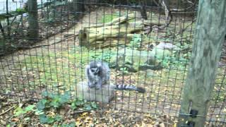 Who Is Number One Lemur