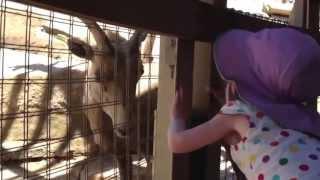 Baby Girl Vs Mountain Goat