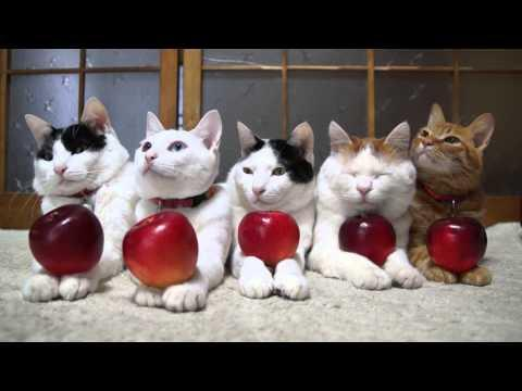 Jokes - Cats Play The Apple Game
