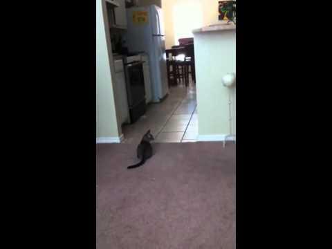 Jokes - Cat Reads Guy's Mind
