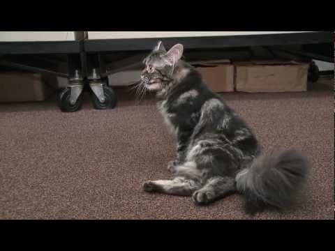 Cute - Students Help Cat Walk Again