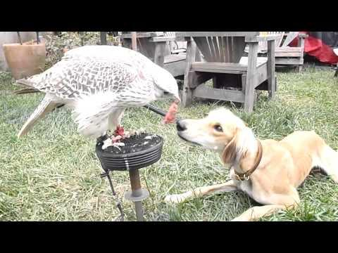Cute - Bird Feeds The Dog