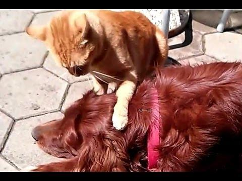 Cat Tests The Patience Of The Dog