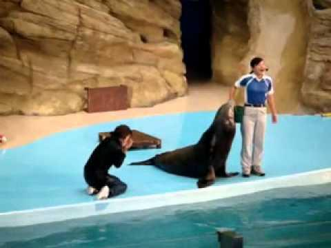 FAIL - Don't Try To Hug A Sea Lion