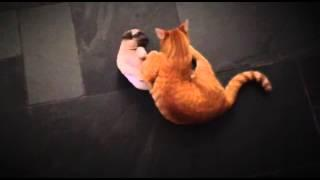 Pug Puppy Play Fights With The Cat