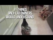 Things Only Cat Owners Would Understand