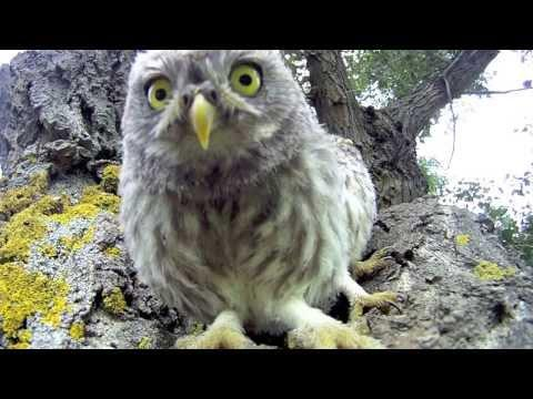 Baby Owls Discover The Camera