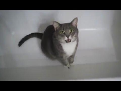Compilation Of Cats Talking To Their Owners