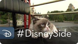 Grumpy Cat Goes To Disney To Meet Grumpy