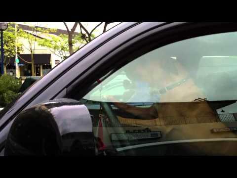 Jokes - Dog Left Inside A Car Starts Honking