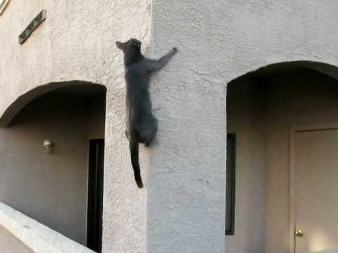 Spider Cat Is Coming For You