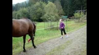 Horse Scares The Girl With Fart