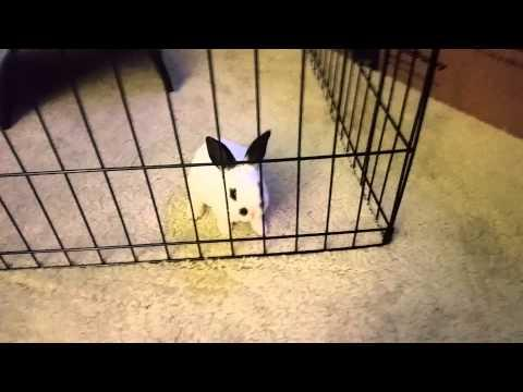 You Can't Keep This Bunny Locked Up