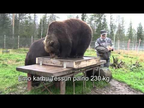 Awesome - Finnish Guys Chilling With Bears