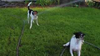 Dogs Vs Garden Hose