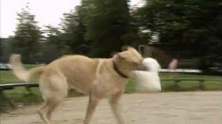 Dog Robot Scares The Real Dog Prank