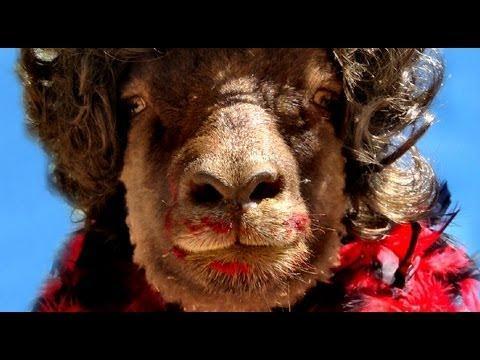 Jokes - Sheep's Halloween Costume