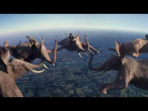 Funny Ad With Animals Doing Crazy Stunts