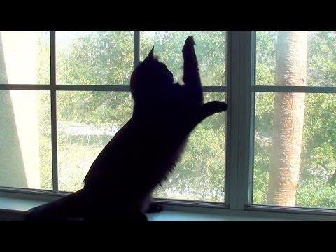 Funny Cat Tries To Attack The Lizard