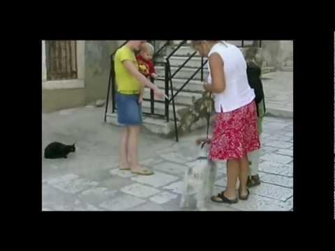 FAIL - Dog Enters The Wrong Turf