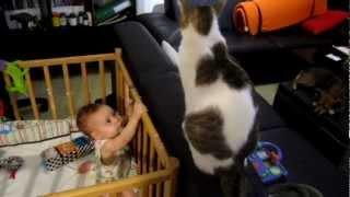 Baby Tries To Grab Cat's Tail