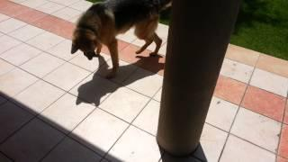 Funny Dog Vs Shadow