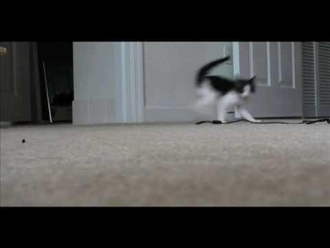 Jokes - Cat's Funny Walk
