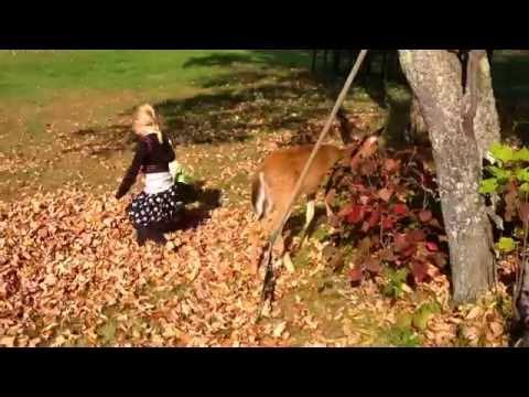 Cute Girls Playing With The Baby Deer