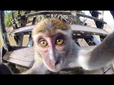 Best Animals Videos Shot Using GoPro From 2014