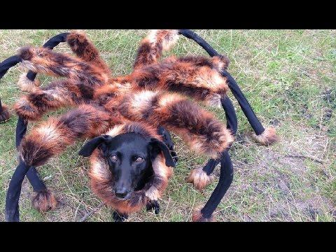 Spider Dog Scare Prank