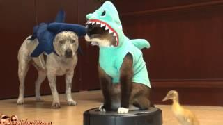 Cat Riding A Roomba Wearing Shark Costume