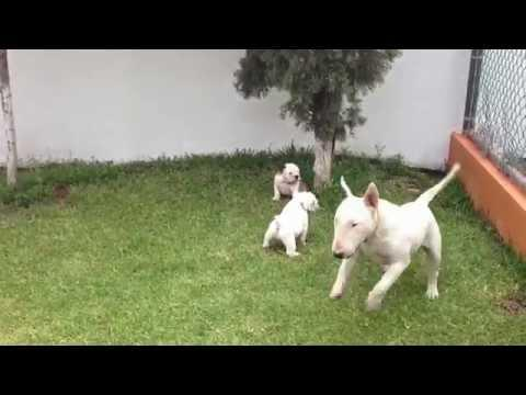 Excited Dog Vs The Puppies