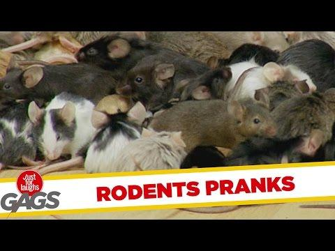 Ultimate Just For Laughs Pranks - Rodents Edition