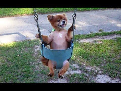 Compilation Of Dogs On The Swing