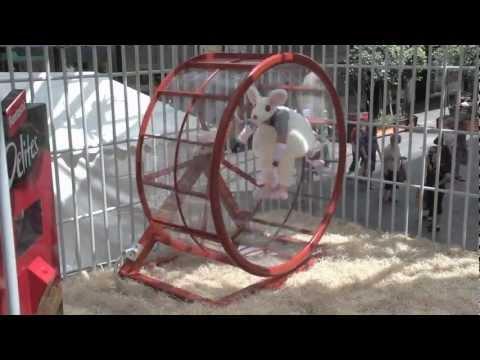 Jokes - Human Hamster Wheel