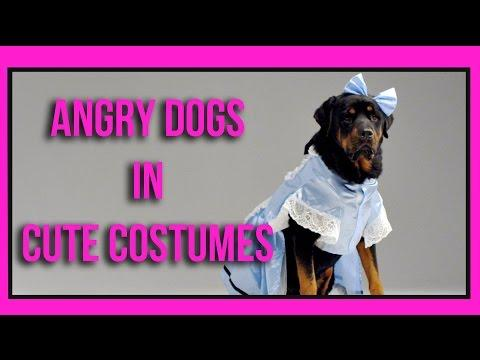 Dogs Don't Like The Costumes