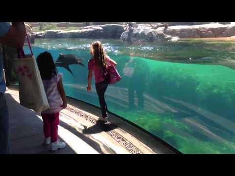 Sea Lion Plays With The Little Girl