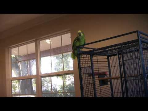Parrot Doesn't Want The Guy To Play The Violin