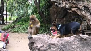 Monkey Refuses To Play With The Puppy