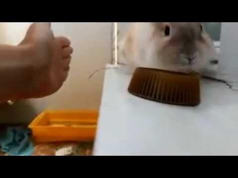 Jokes - Rabbit Being Rude