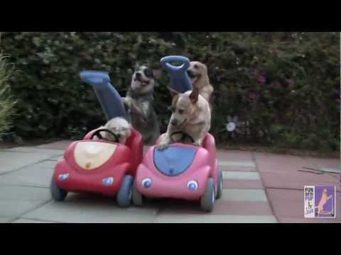 Cute - Dog Stroller Race