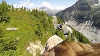 Go Flying With The Eagle POV