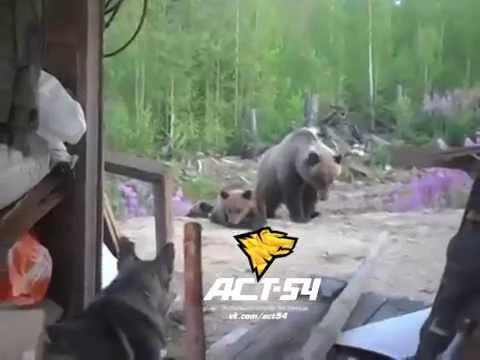 Why You Shouldn't Mess With A Bear Cub