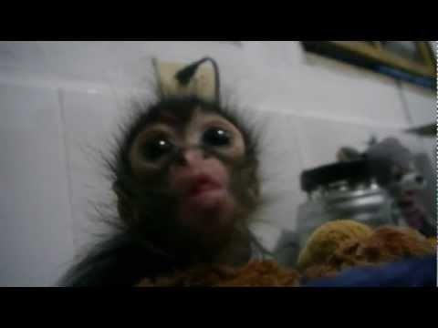 Cute - Hungry Baby Monkey